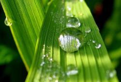 ecologie ambientala