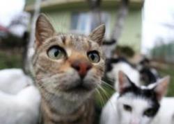 hingherii prind pisici