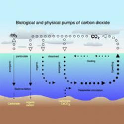 oceanele absorb mai putin CO2