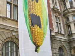 organisme modificate genetic