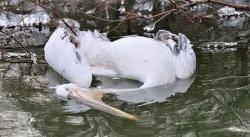pasari ucise in delta