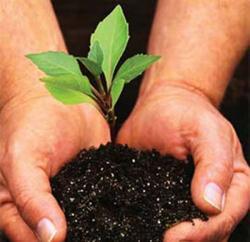plantare