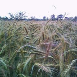 suprafete cultivate ecologic