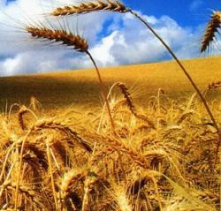 targ agricultura