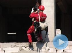 caini care salveaza oameni