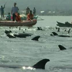delfini naufragiati
