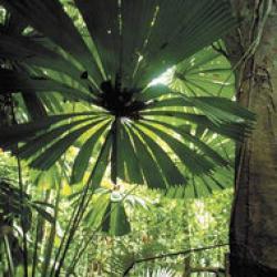 distrugerea padurilor tropicale