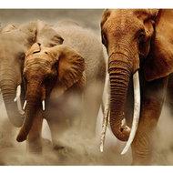 Gabon: 11.000 de elefan?i au disp?rut în urma braconajului, din 2004