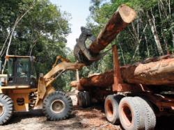 exploatarea lemnului