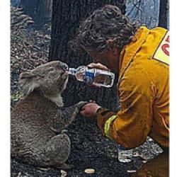 incendiul din australia