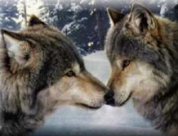 lupi clonati