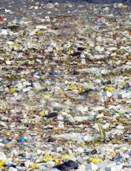 Poluarea plastica a oceanelor