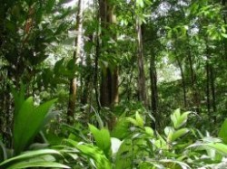 P?durile tropicale vor absorbi tot mai pu?in dioxid de carbon ca urmare a schimb?rilor climatice