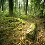 Romsilva a transmis către 9 primării din Vâlcea toate drumurile forestiere
