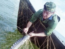 Ministrul Agriculturii va prelua coordonarea ANSVSA.Pescarii trec la Mediu