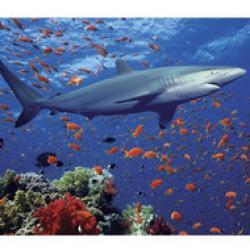 protectia rechinilor