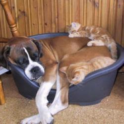 pungi si manusi pentru animale