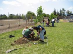 tree-planting-go-green-initiative.jpg