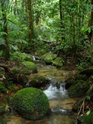 amazon-forest.jpg
