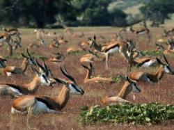 antilope in pericol
