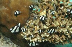 fauna marina