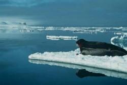 Antarctida, topirea ghetarilor
