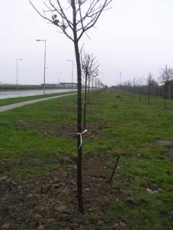Plantarea primelor perdele forestiere de-a lungul autostr?zilor ar putea avea loc în prim?vara 2014