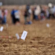 """2112 voluntari """"Plantam fapte bune in Romania"""" au plantat 60.000 copacei in 8 judete"""