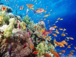 organisme-marine.jpg