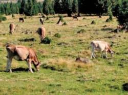Intretinerea pajistilor permanente, cea mai discutata problema la intalnirile specialistilor CAJ Alba cu producatorii agricoli