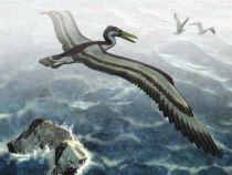 Pelagornithidae