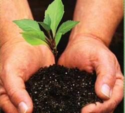 Angajatii BCR au plantat copaci la Virtescoiu
