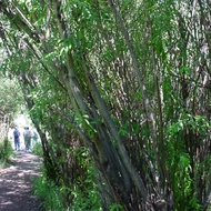 "Asociatia ""Satu Mare – oras verde"" prezinta o afacere profitabila cu plante gigantice"