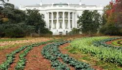 white-house-organic-garden-lawn-planted-rows-of-vegetable-green-leafy-plants-washington-dc-president-front-columns-pennsylvania-avenue-photo.jpg