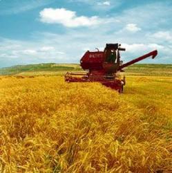 agricultura-ecologica.jpg