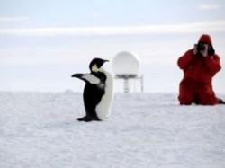 Ecosistemul din Antarctica are o vechime de peste 33,6 milioane de ani