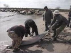delfini morti