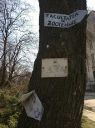elibereaza copacii
