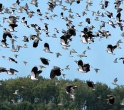 Ziua Internaţională a Păsărilor Migratoare se sarbatoreste in al doilea weekend al lunii mai