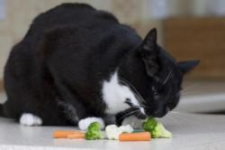 pisica vegetariana