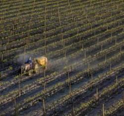 Cum facem conversia la viticultura ecologica?