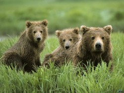 De Ziua Internationa a Biodiversitatii, Asociatia Ecosofia va invita la Gradina Zoologica din Bucuresti