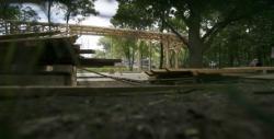 bamboo in parcul herastrau
