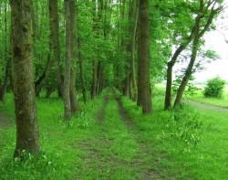 Suprafata fondului forestier in proprietatea publica a statului s-a redus cu 3,02 milioane ha, in ultimii 20 de ani