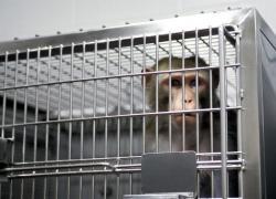 experimente pe animale