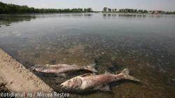 masacru piscicol