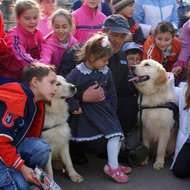 Anul viitor ar putea fi infiintata Politia Animalelor, afirma presedintele ANSVSA
