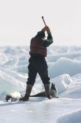 produse din foca