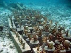 viitorul oceanelor