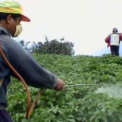 agricultura clasica